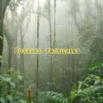 Captura de pantalla 2019-02-11 a las 16.12.49