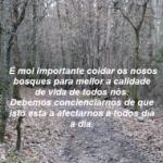a importancia dos nosos bosques