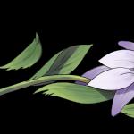 flor arrancada